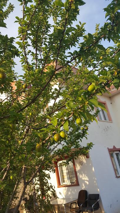 Antalya pet pansiyon