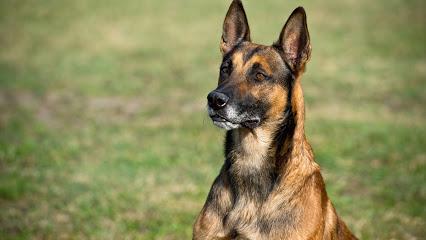 KÖPEK EĞiTiMi ANTALYA - ANTALYA KÖPEK EĞiTiM MERKEZi, köpek oteli, köpek pansiyonu